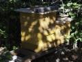 Karlsgarten, Bienen